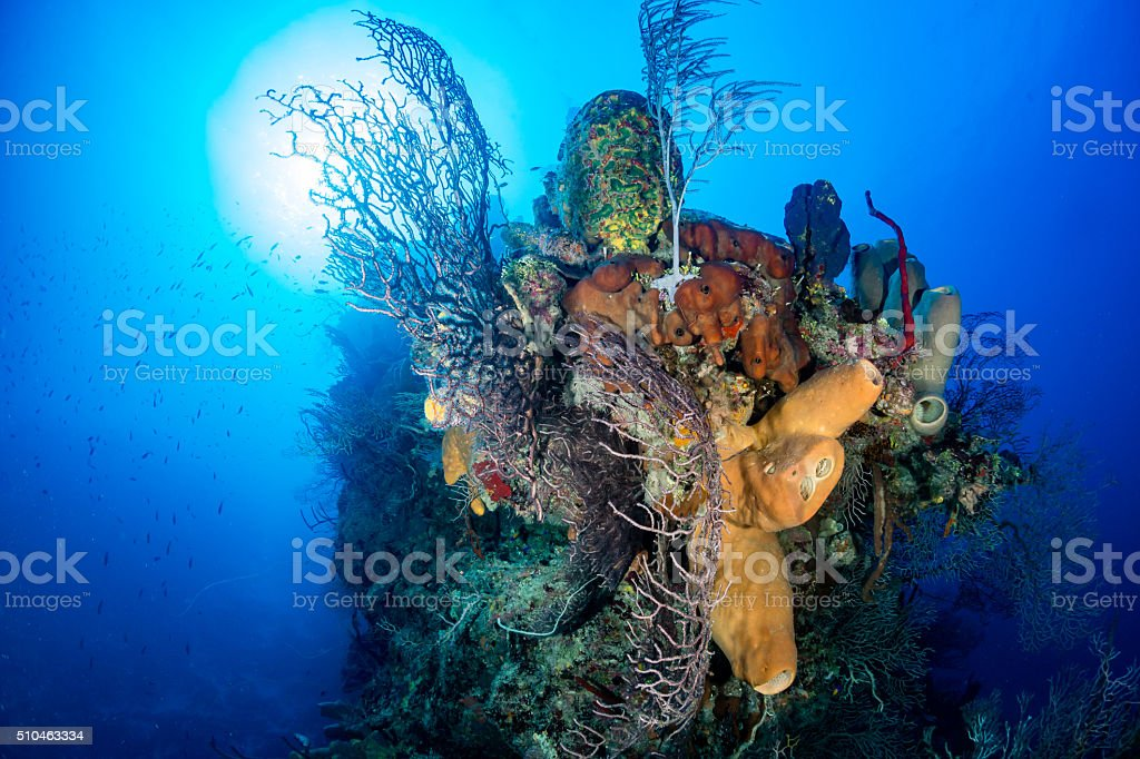 Beautiful Tropical Coral Reef stock photo