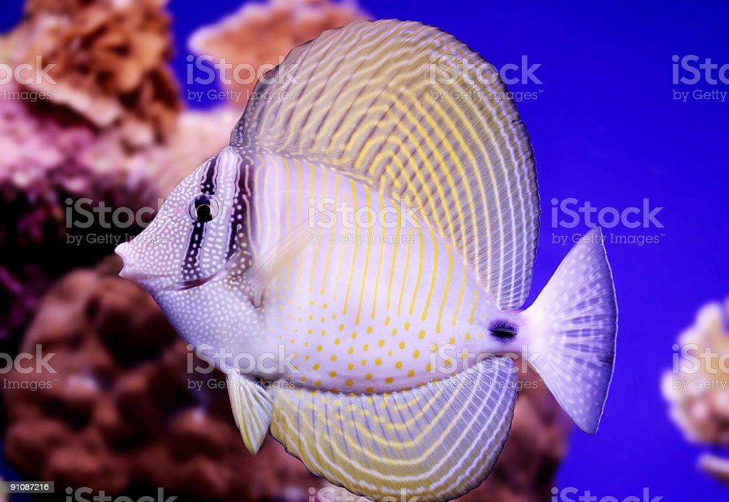 Beautiful Tropical Fish stock photo