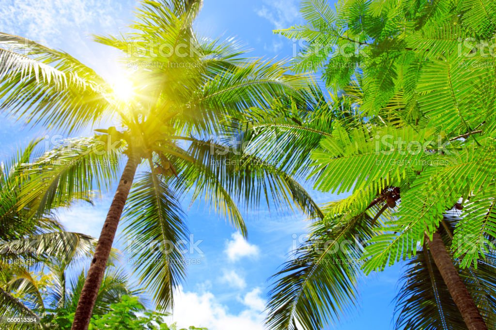 Beautiful tropical sunshine with palm tree and sun stock photo