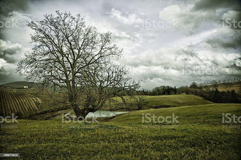 Beautiful Tucany royalty-free stock photo