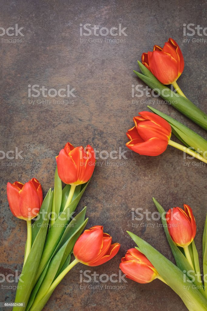 Beautiful tulip flowers scattered over rustic background stock photo