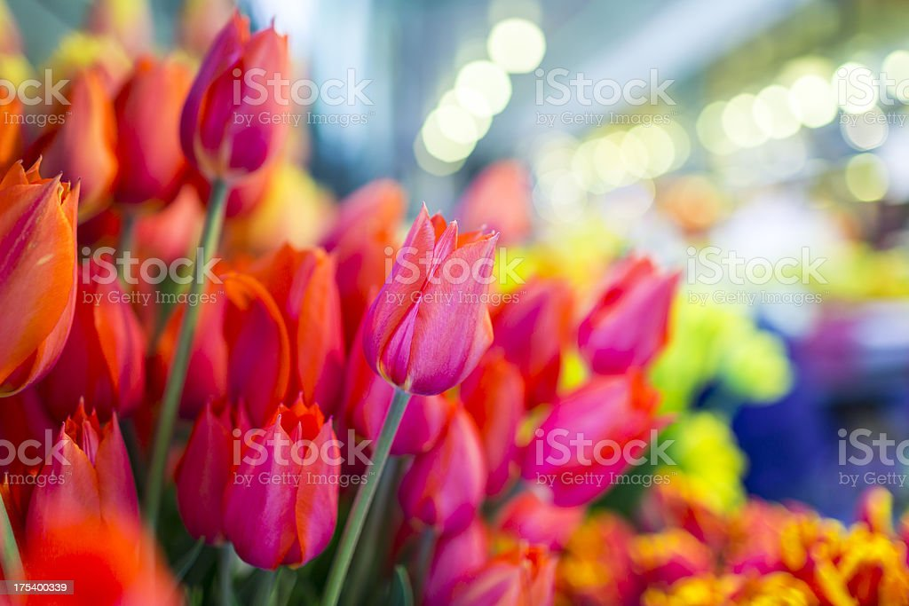 Beautiful tulips bunch royalty-free stock photo