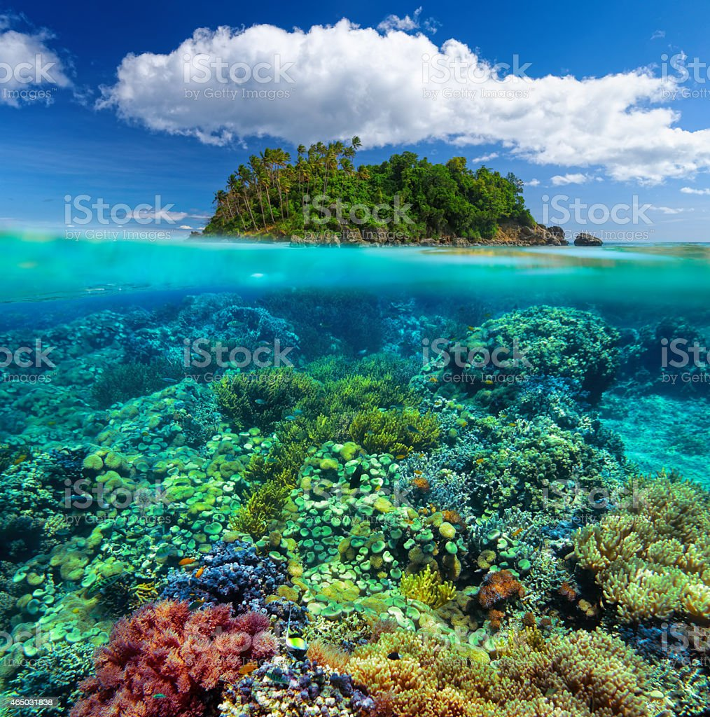 Beautiful underwater garden on the background of island. stock photo