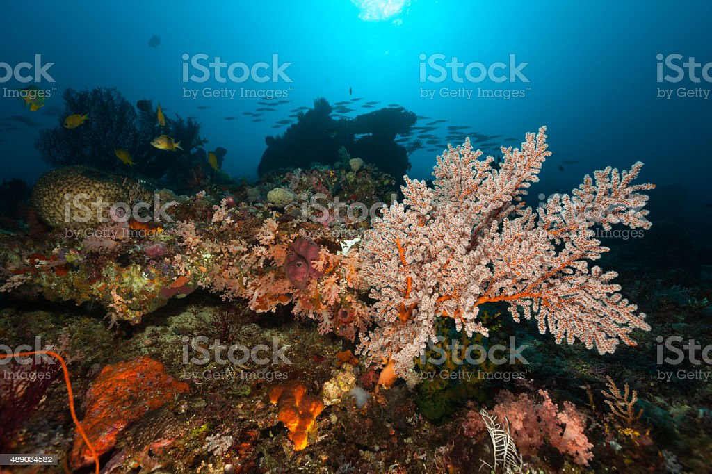 Beautiful Underwater Scenery, Chromis and Fusiliers, Komodo National Park, Indonesia stock photo