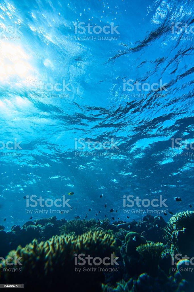 Beautiful underwater world stock photo