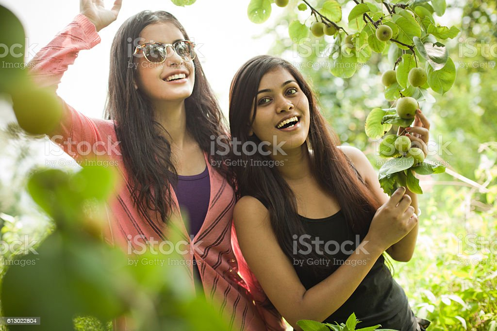 Beautiful urban girls holding tree branch full of Asian pear. stock photo