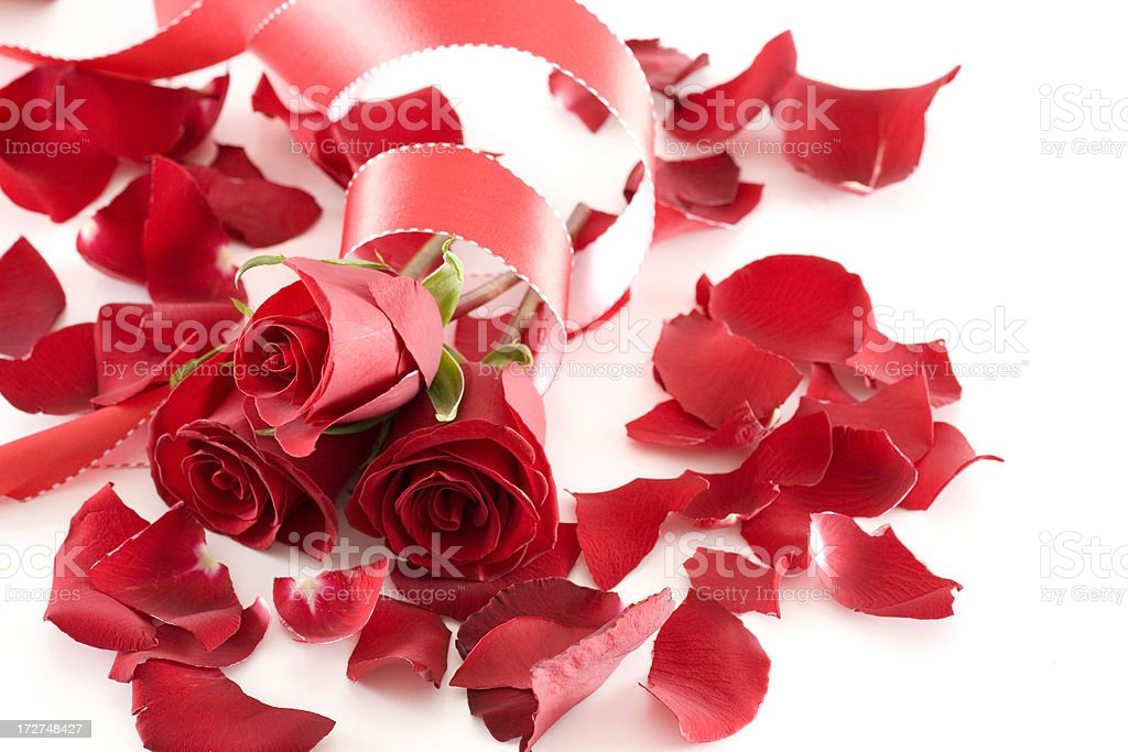 Beautiful Valentine Rose Bouquet with Petals and Ribbon on White royalty-free stock photo