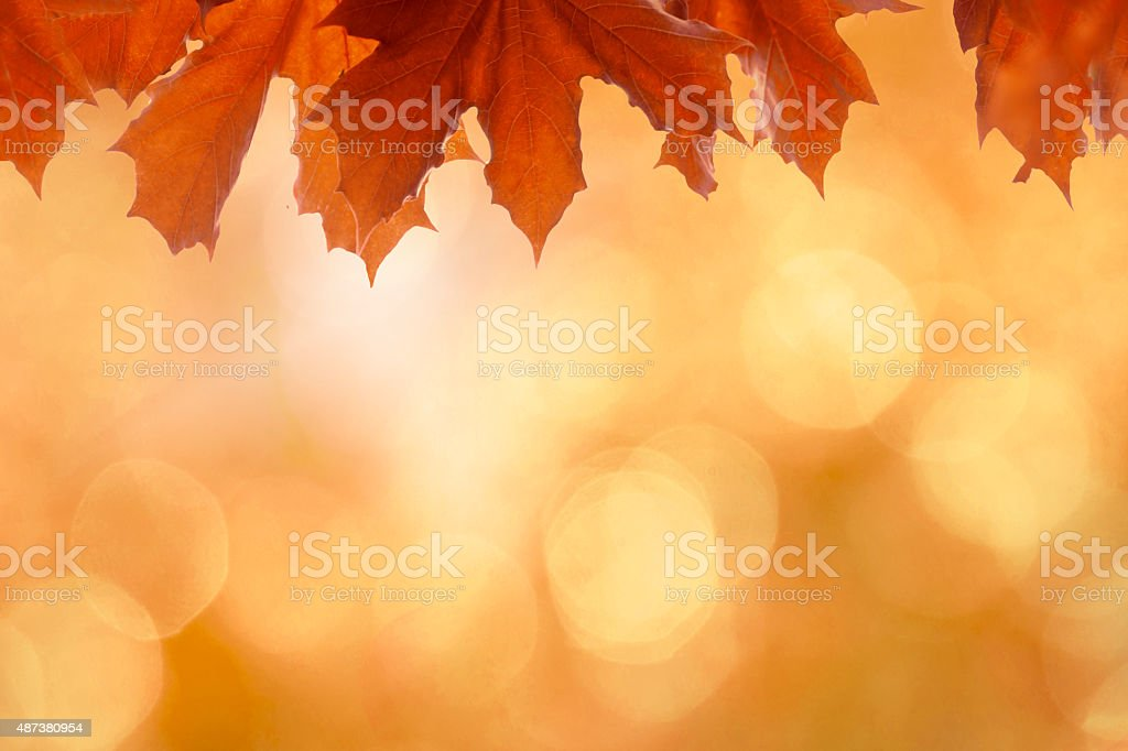 Beautiful vibrant orange autumn background with leaves, bokeh and sunlight stock photo