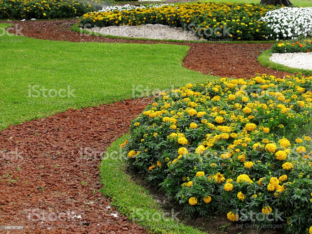 Beautiful vibrant park with yellow flowers and green bushes stock photo