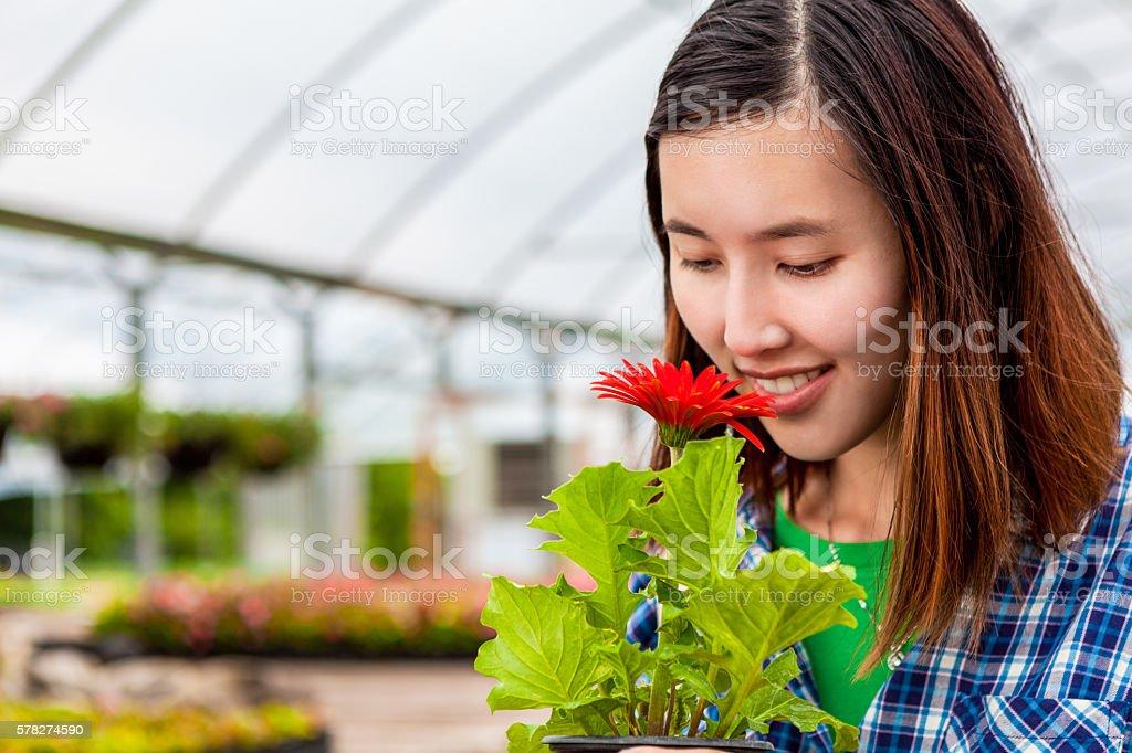 Beautiful Vietnamese woman smells flower stock photo