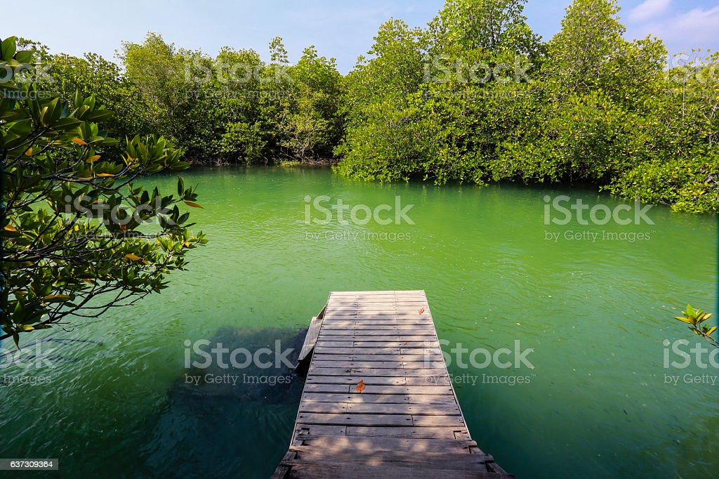 beautiful view from balcony to mangrove forest. stock photo