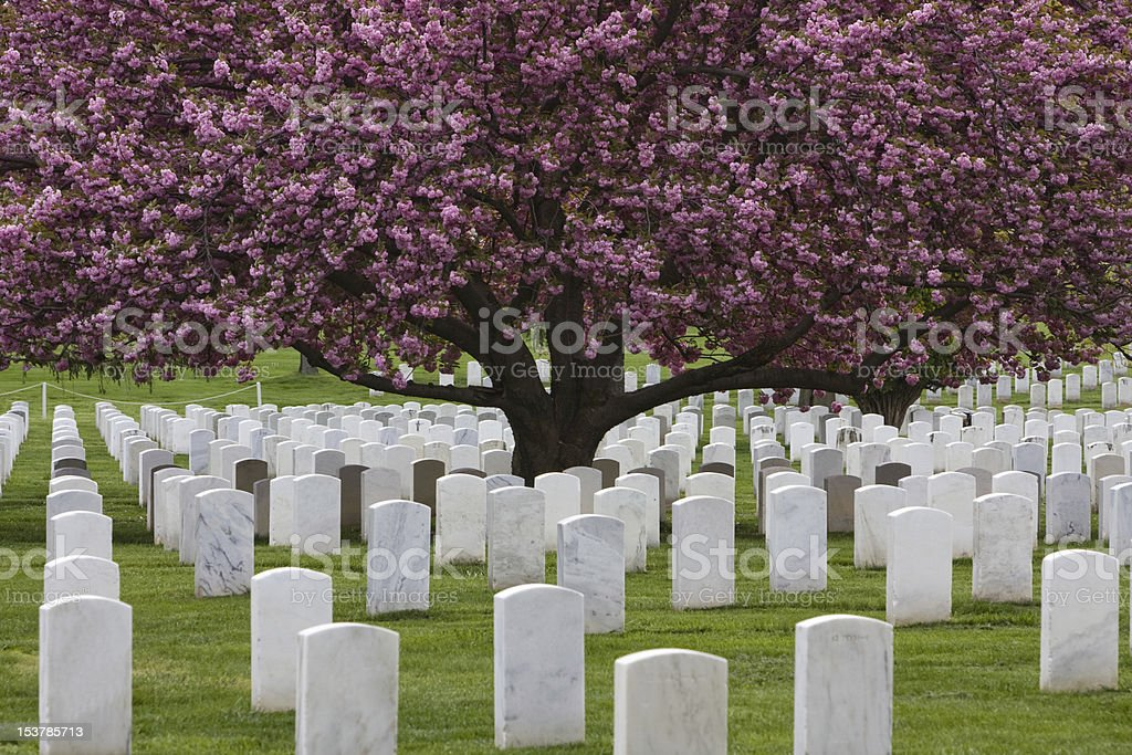 A beautiful view of a tree at Arlington national cemetery stock photo