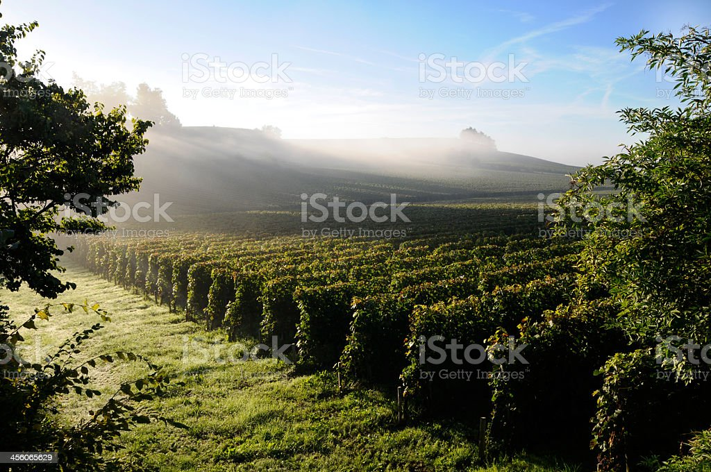 A beautiful view of a vineyard stock photo