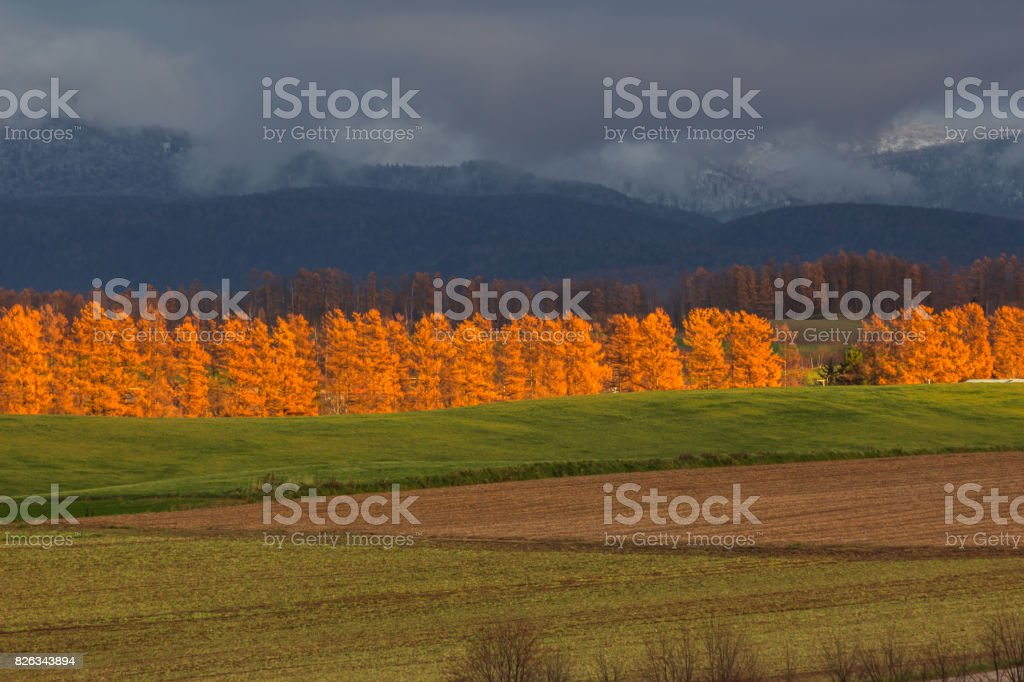 Beautiful view of Biei in autumn stock photo