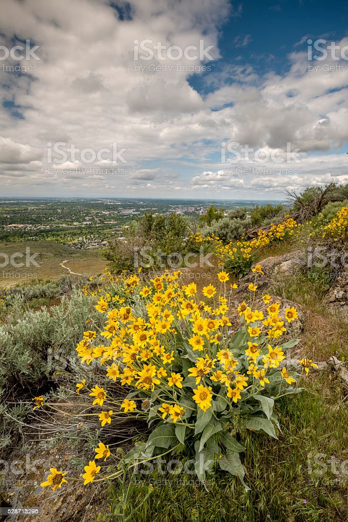 Beautiful view of Boise with spring flowers stock photo