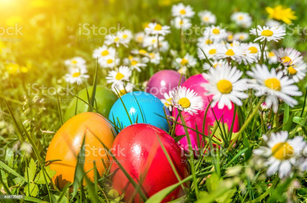 Beautiful view of colorful Easter eggs lying in the grass between daisies and dandelions in the sunshine stock photo