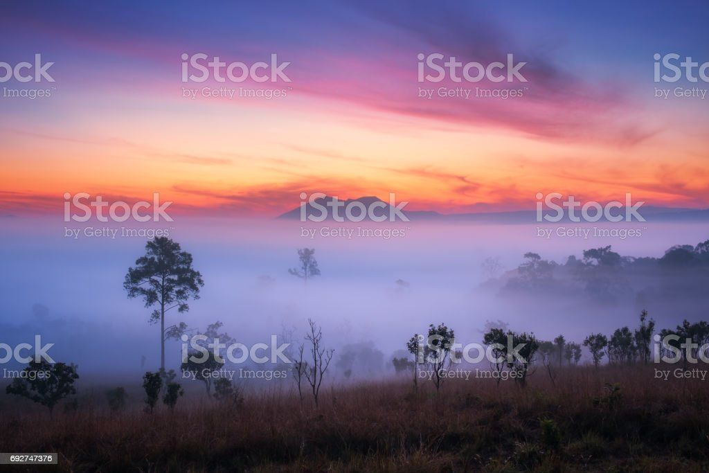 Beautiful view of forest with fog in morning at at Thung Salaeng Luang National Park Phetchabun Province,Thailand. stock photo