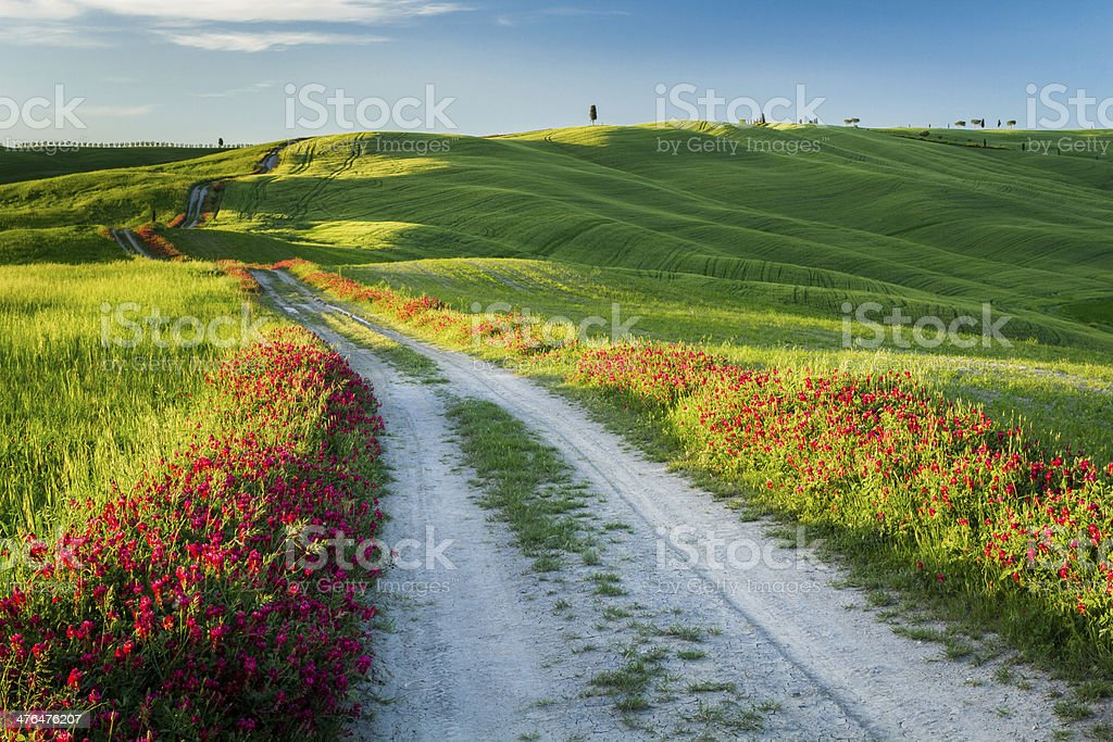 Beautiful view of green fields and meadows at sunset, Tuscany stock photo