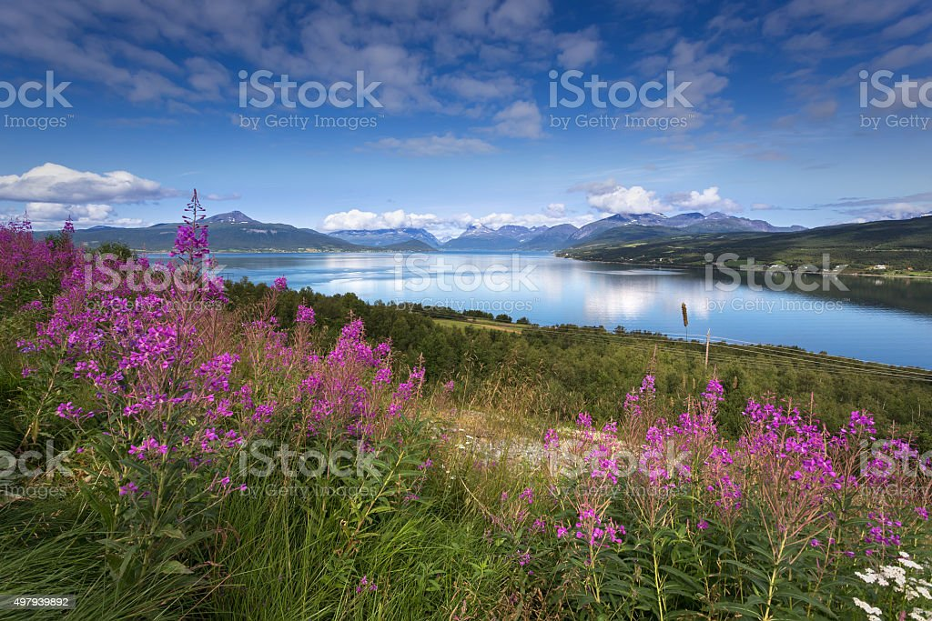Beautiful view of nothern Norway, Lyngen Alps stock photo