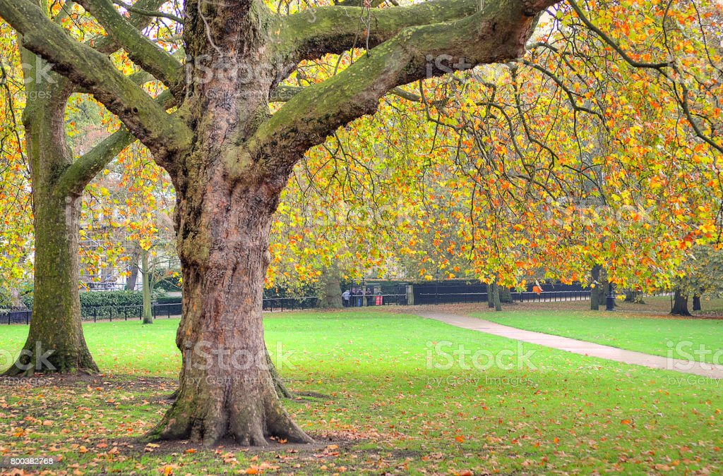 A beautiful view of St. Jamess Park in London during Spring stock photo