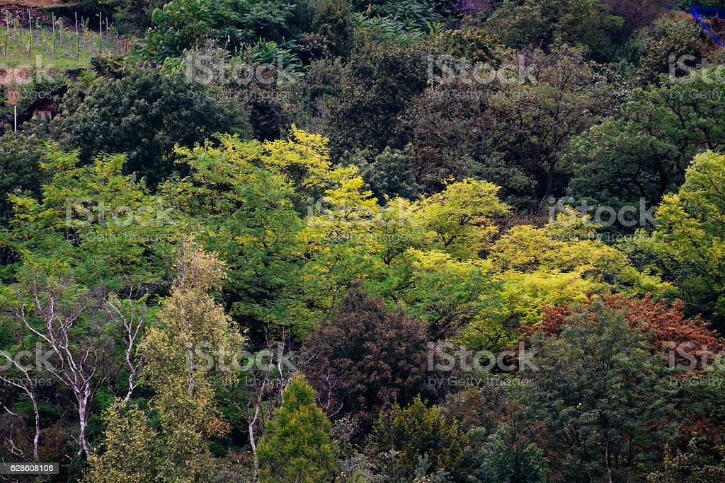 Beautiful view of the autumn forest stock photo