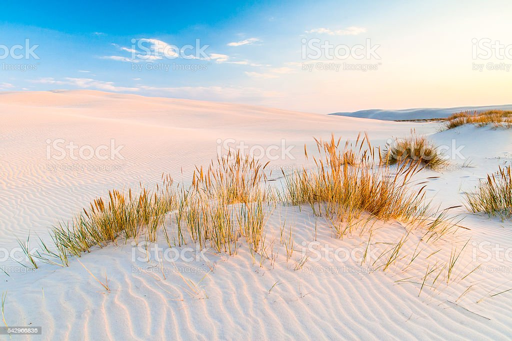 beautiful view of the coastal dunes stock photo