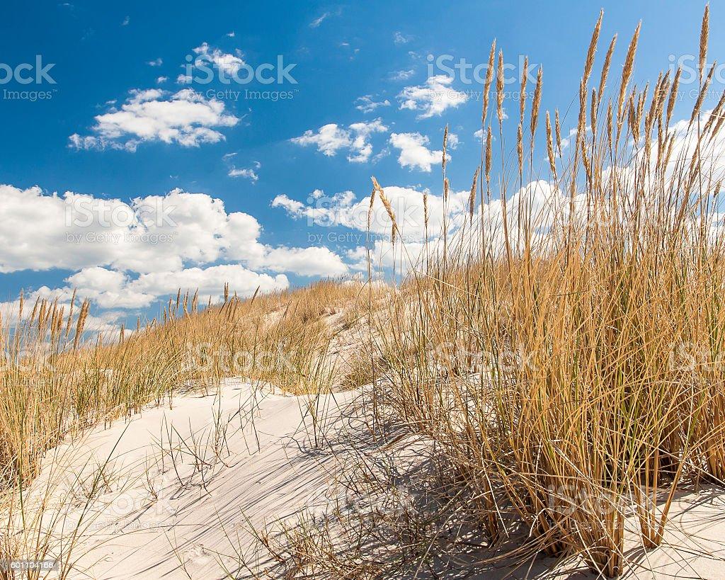 beautiful view of the coastal dunes stock photo