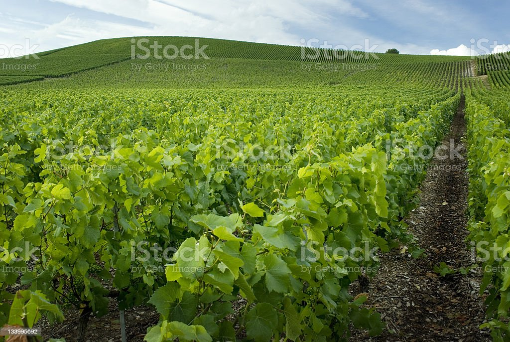 Beautiful view of the gardens in Champagne France royalty-free stock photo