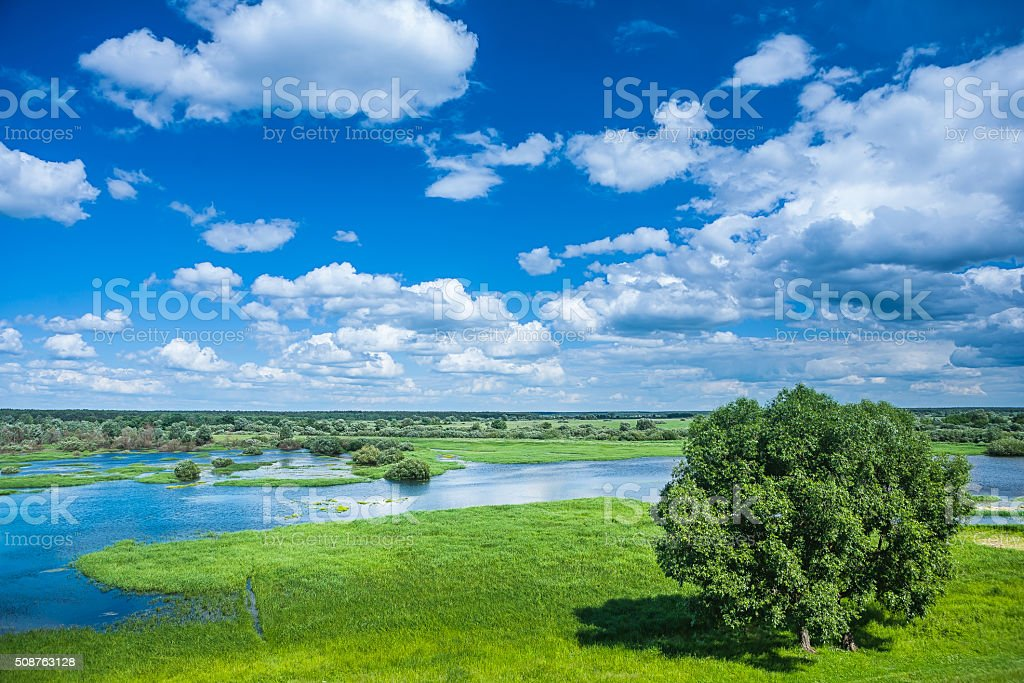 beautiful view on flowed field in spring stock photo