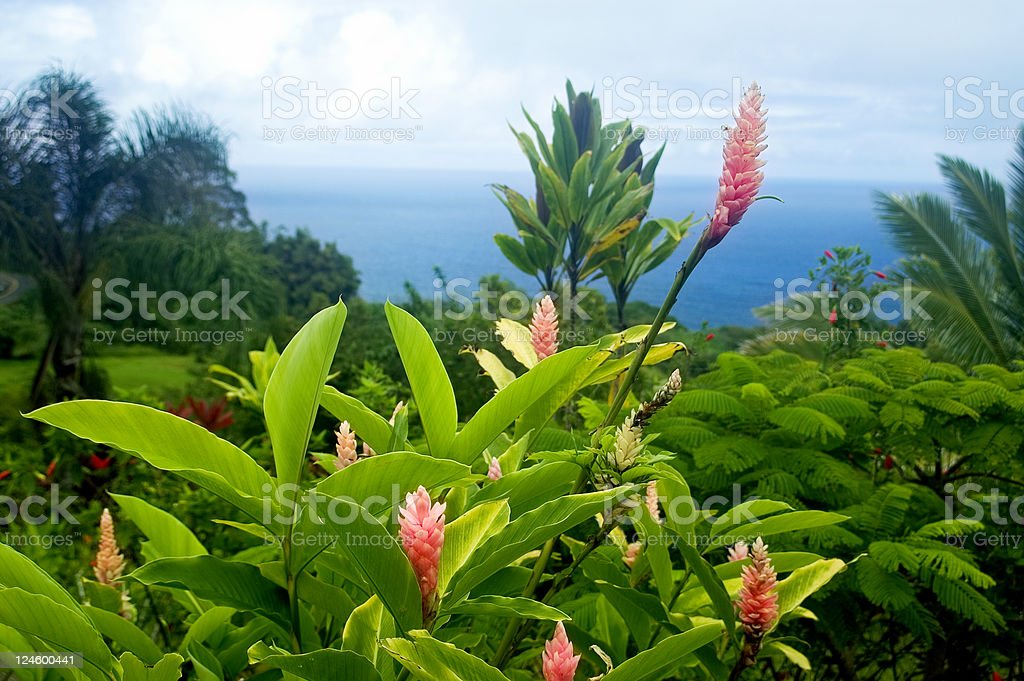 Beautiful View royalty-free stock photo
