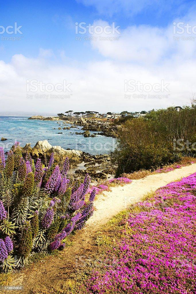 Beautiful View (California) royalty-free stock photo