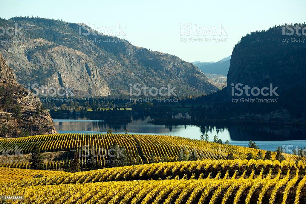 Beautiful vineyard in Okanagan Valley royalty-free stock photo