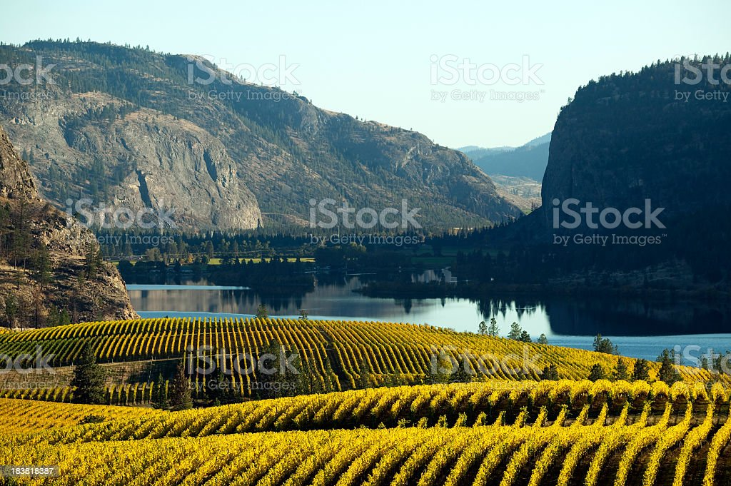 Beautiful vineyard in Okanagan Valley stock photo