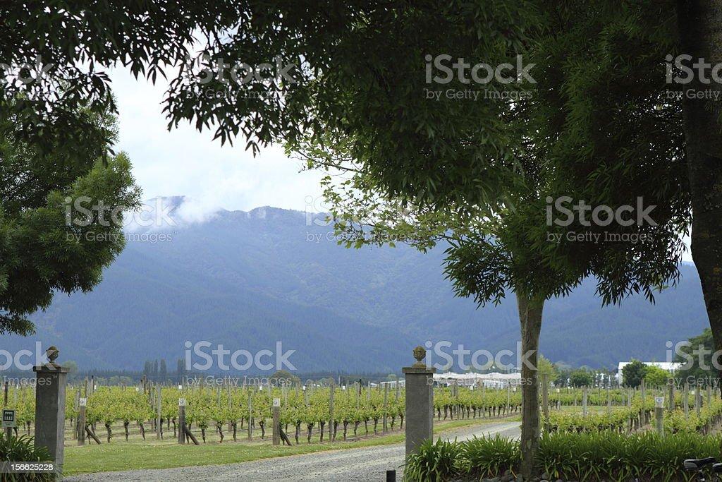 Beautiful vineyard royalty-free stock photo