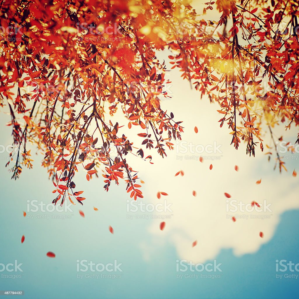 Beautiful vintage autumn background stock photo