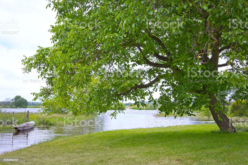 Beautiful Walnut Tree stock photo