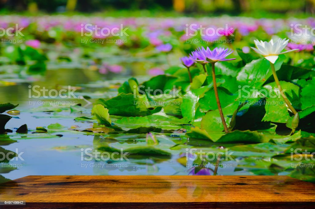 Beautiful water lily or lotus flower blooming stock photo