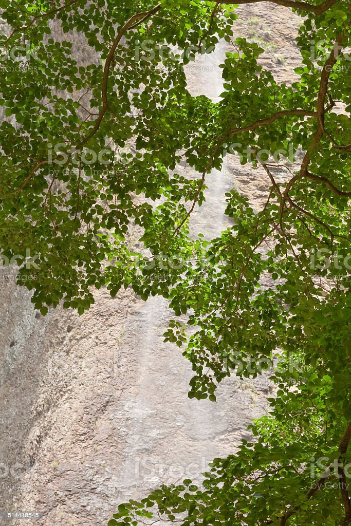 Beautiful  Waterfall with Branch stock photo