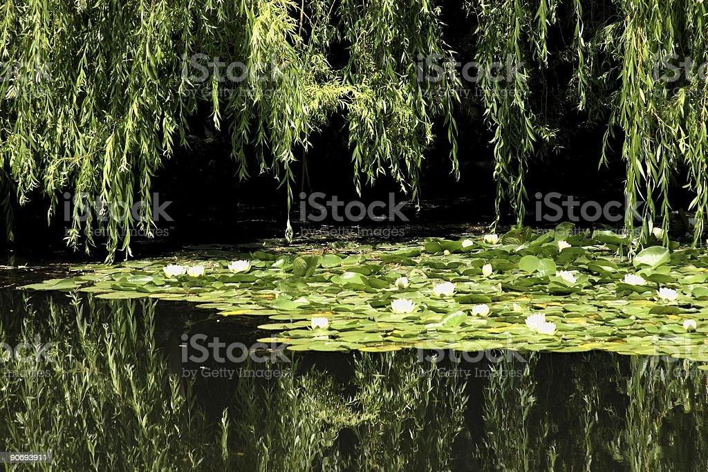 Beautiful Watergarden royalty-free stock photo