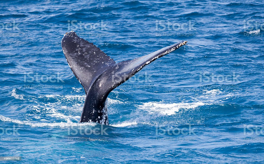 beautiful whale stock photo