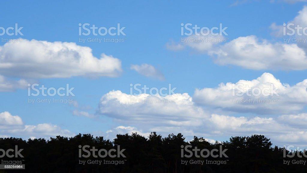 Blancas nubes sobre suave bosque de coníferas en día soleado foto de stock libre de derechos