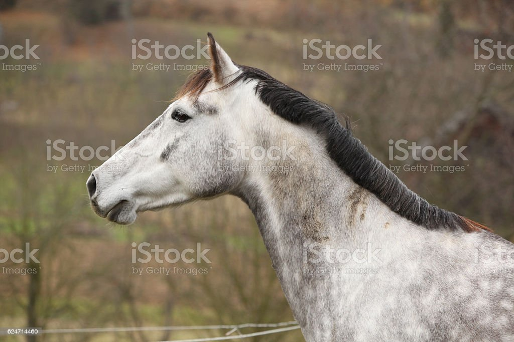 Beautiful white horse on pasturage stock photo