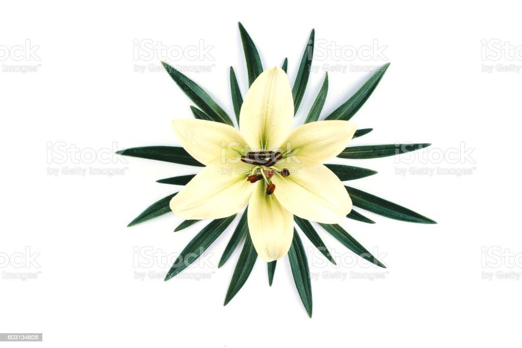 Beautiful white lily isolated on white background. stock photo