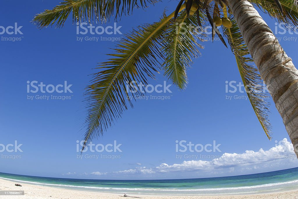 Beautiful white sand beach with palm tree and blue sky royalty-free stock photo