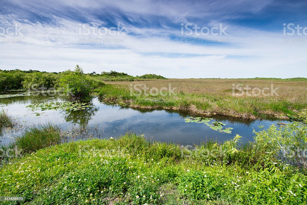 Beautiful Wide Angle Swamp stock photo