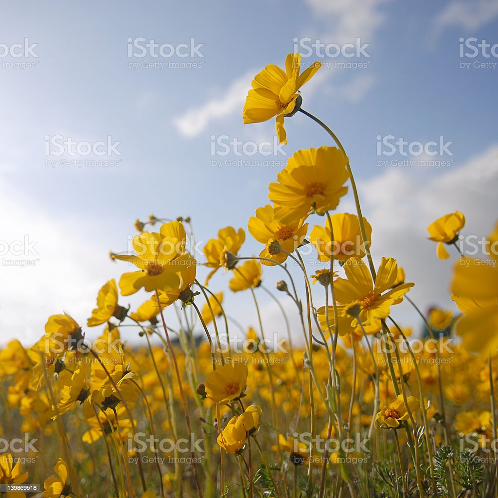 Beautiful Wild Flowers royalty-free stock photo
