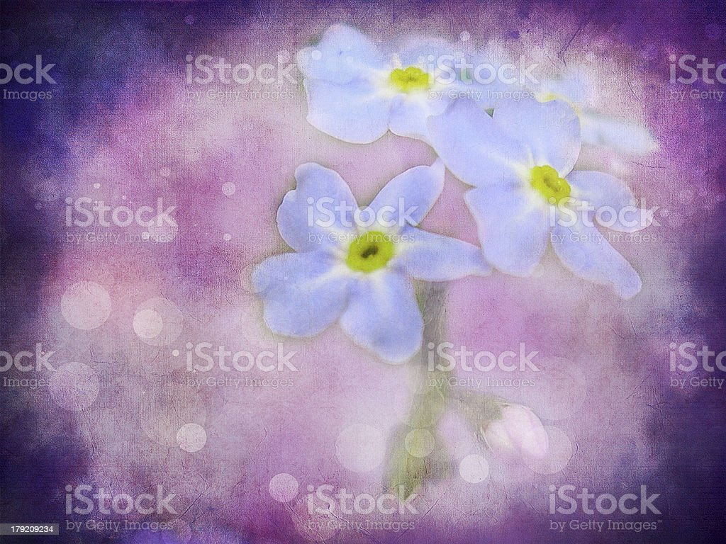 Beautiful Wild Flowers With Abstract Background Stock Photo