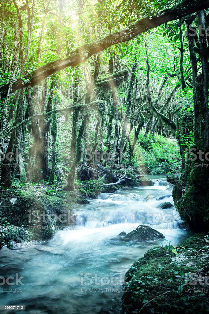 Beautiful wild fresh water stream in forest under bright sunlight stock photo