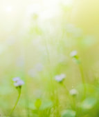 beautiful wildflower and blur green grass background with sunlight