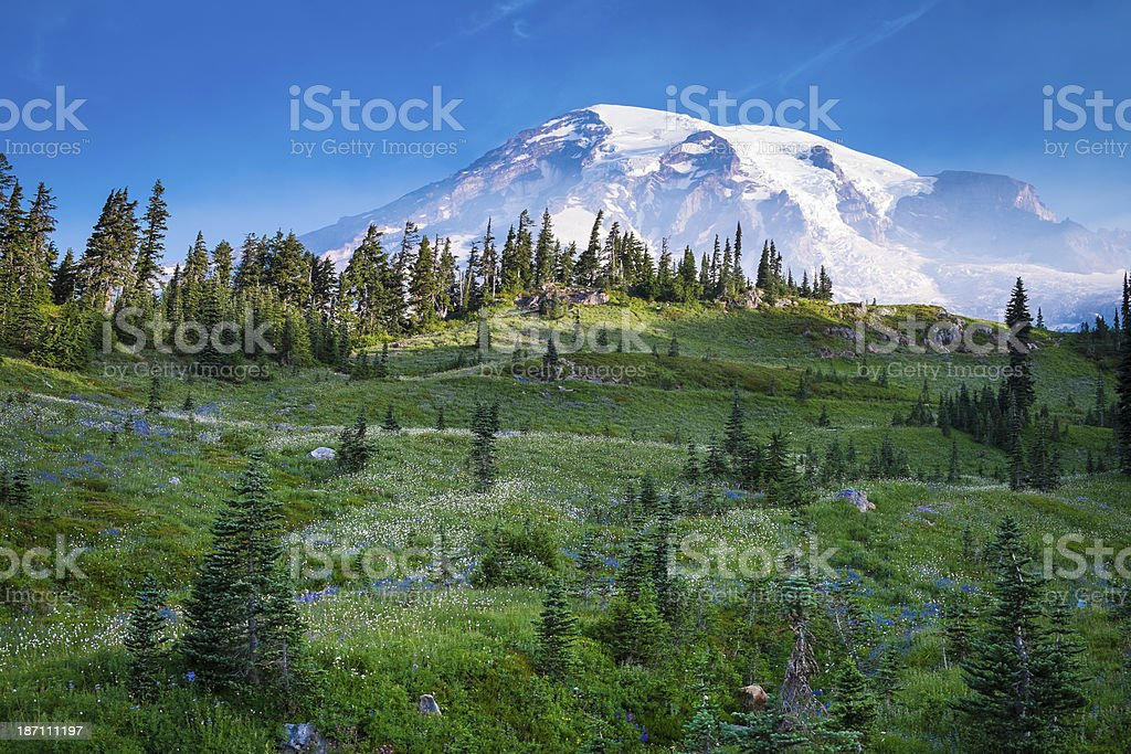 Beautiful wildflowers and Mount Rainier stock photo